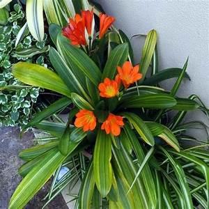 Plante Fleurie Intérieur : plante fleurie d 39 int rieur liste ooreka ~ Premium-room.com Idées de Décoration