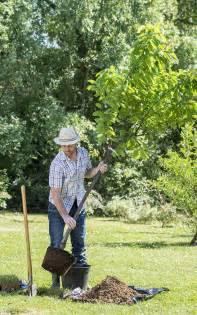 planter un arbre fruitier en pot comment bien planter un arbre fruitier jardinerie truffaut conseils arbres et arbustes