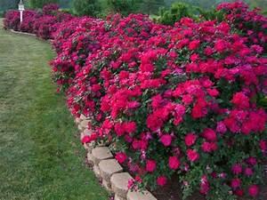 Beautiful, Flower, Bed, Border, Rickyhil, Outdoor, Ideas