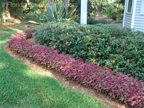 perennial border plants for sun florida friendly edging plants florida plants gardens pinterest seasons spreads and sun