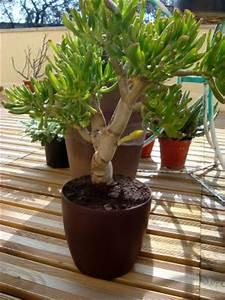 Plantes En Pot Pour Terrasse : des cactus pour une terrasse plein sud ~ Dailycaller-alerts.com Idées de Décoration
