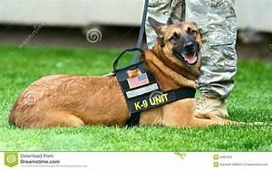 stock photos k 9 dog image