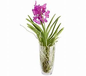Orchidee Vanda Pflege : vanda im glas dehner garten center ~ Lizthompson.info Haus und Dekorationen