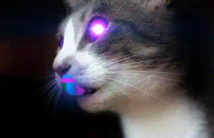 trippy cat psychedelic cat on