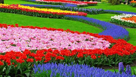 flower garden  border  colorful perennials