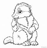 Coloring Muskrat Badger Pages Ox Musk Animals Drawing Printable Others Getcolorings Omalovanky Zvirata Sheet Lesni Getdrawings sketch template