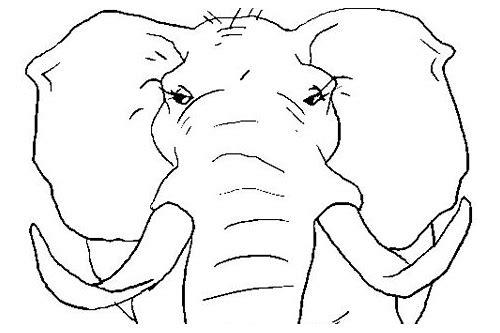 baixar olhos de elefante para imprimir