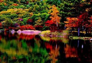 Autumn, Forest, Reflection, 4k, Ultra, Hd, Wallpaper