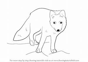 Learn How To Draw A Arctic Fox Antarctic Animals Step By