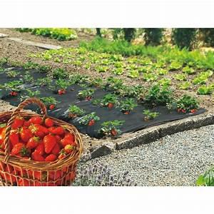 Geotextile Mr Bricolage : film de paillage sp cial fraises 1 40 x 10 m nortene ~ Melissatoandfro.com Idées de Décoration