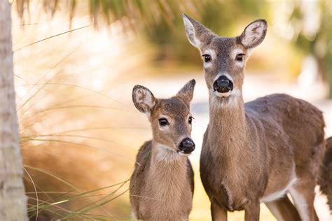 Deer Population