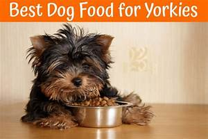 Best dog food for yorkies guide in 2017 us bones for Best dog food for yorkies