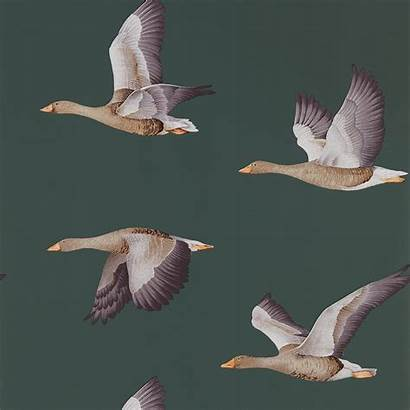 Sanderson Elysian Geese Wallpapers Amsterdam Zoom Interiors
