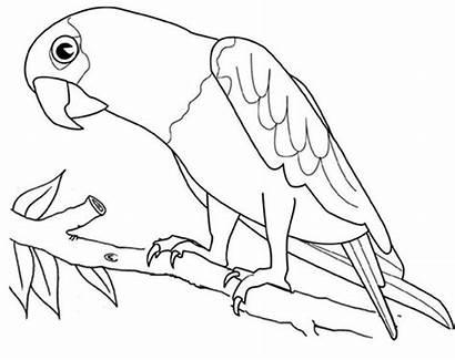 Macaw Coloring Bird Parrot Familyfriendlywork