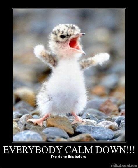 Calm Down Quotes Funny
