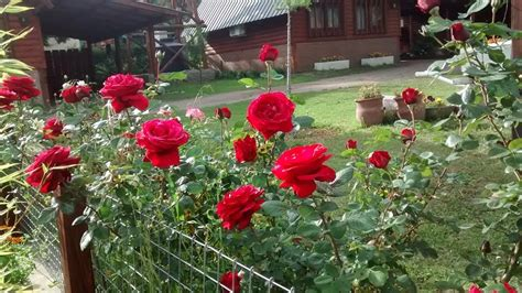 Jardin Florido En Primavera Cabaña En La Granja
