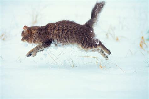 cat running run fast wheel cats miss