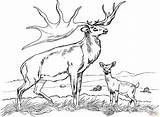 Coloring Elk Pages Printable Popular sketch template