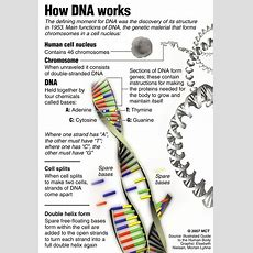 5 Dna Structure Worksheet  Biological Science Picture Directory Pulpbitsnet