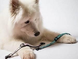 dog collar  leash