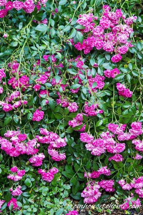 Full Sun Perennials 10 Beautiful Low Maintenance Plants