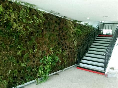 creer un mur vegetal exterieur sedgu