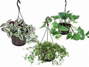 Pflanzen Für Innen : ampelpflanze f r innen 2 99 lidl angebot ~ Michelbontemps.com Haus und Dekorationen