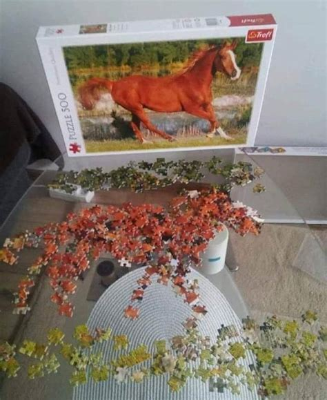 funny puzzle horse finished december