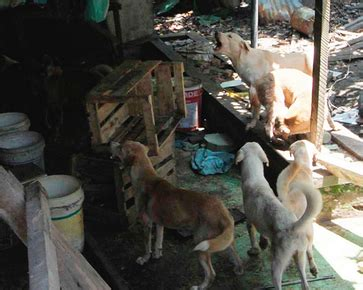 man  indonesia left   dogs unfed   weeks