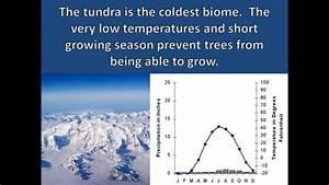 Tundra Adaptations Youtube