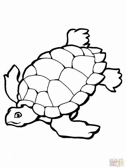 Turtle Coloring Sea Pages