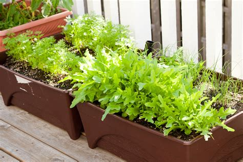 Vegetable Gardening In Containers  Peanut Blossom