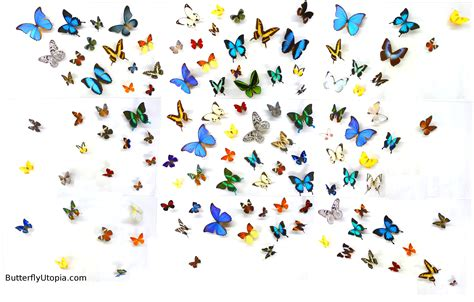 Animated Fly Wallpaper - free butterfly wallpapers hd resolution 171 wallpapers