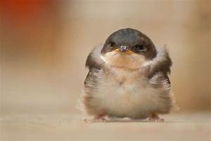 Cute Baby Birds – WeNeedFun