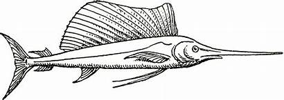 Fish Coloring Swordfish Sailfish Sword Drawings Fishing