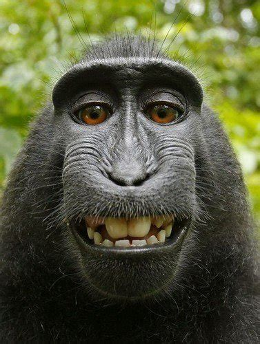 hilarious facial expressions  animals animals zone