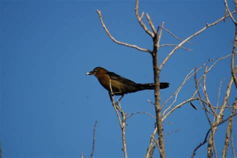 bird behavior sibley nature center