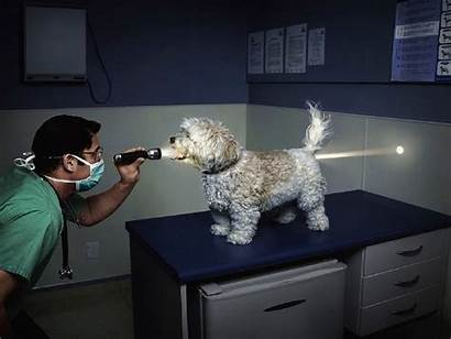 Funny Dog Doctor Hole Xp Dr Walls
