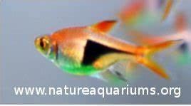 10 Highly Re mended Fishes For Planted Aquariums