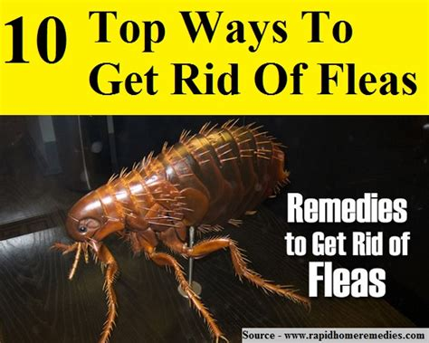 10 Top Ways To Get Rid Of Fleas  Home And Life Tips