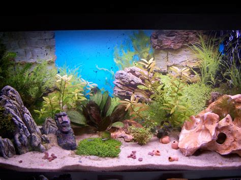 recherche sur le tag aquarium eskuel net