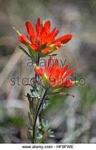 Beautiful vivid orange red flowers and green leaves of