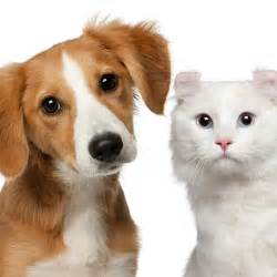 animal clinic of morris plains 7 ways to prolong your or cat s animal clinic