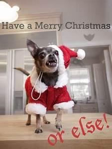 Christmas Dog Quotes QuotesGram