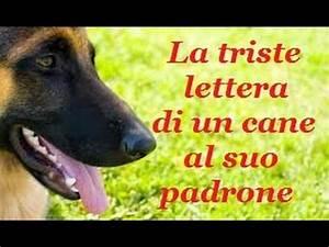 Lettera Di Un Cane - No All U0026 39 Abbandono
