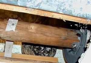 Fliegen Im Rolladenkasten : wespe im rollladen ~ Lizthompson.info Haus und Dekorationen