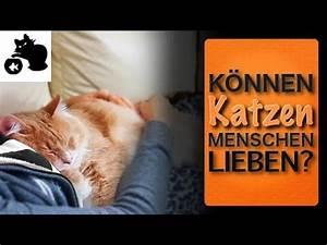 Wie Fange Ich Eine Katze : k nnen katzen menschen lieben liebt meine katze mich wenn ja wie zeigen katzen ihre zuneigung ~ Markanthonyermac.com Haus und Dekorationen
