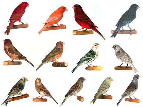 All Kinds Of Birds