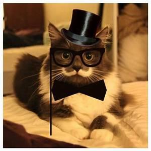 Mustache Kitten - Barnorama