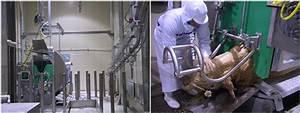 Cattle Beef Abattoir Process Slaughterhouse Equipment Carcass Lifting Machine